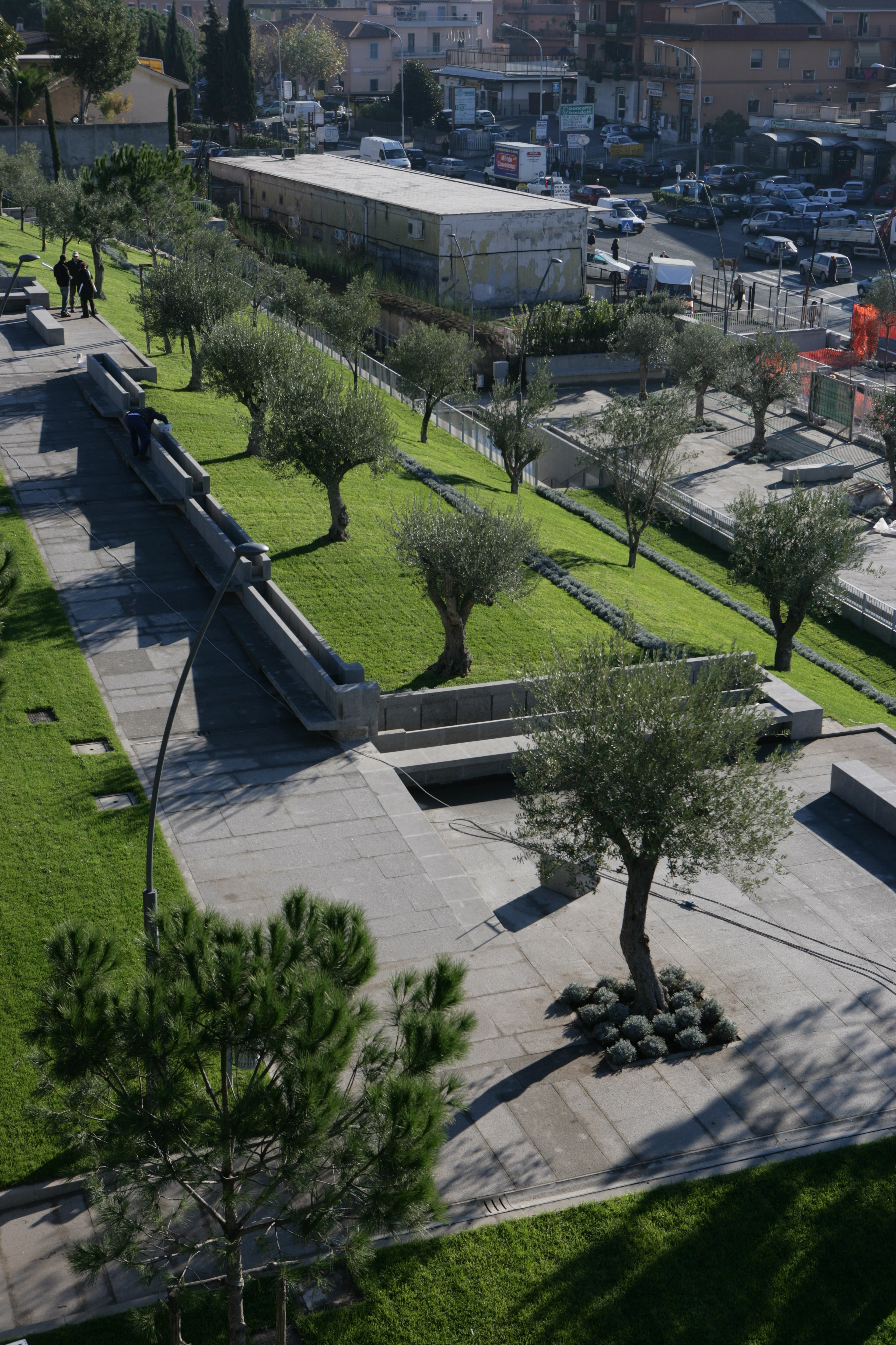 Sistemazione aree verdi con olivi e lavande sulle terrazze sfalzate del parco