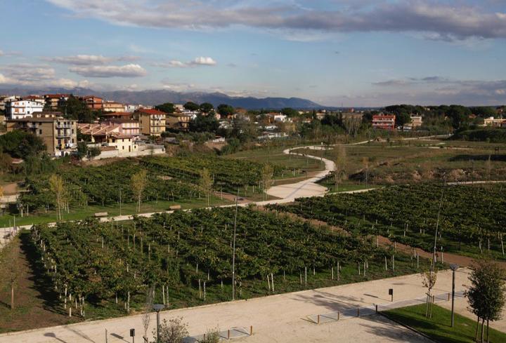 vista sulle vogne presenti all'interno del parco di prato fiorito roma